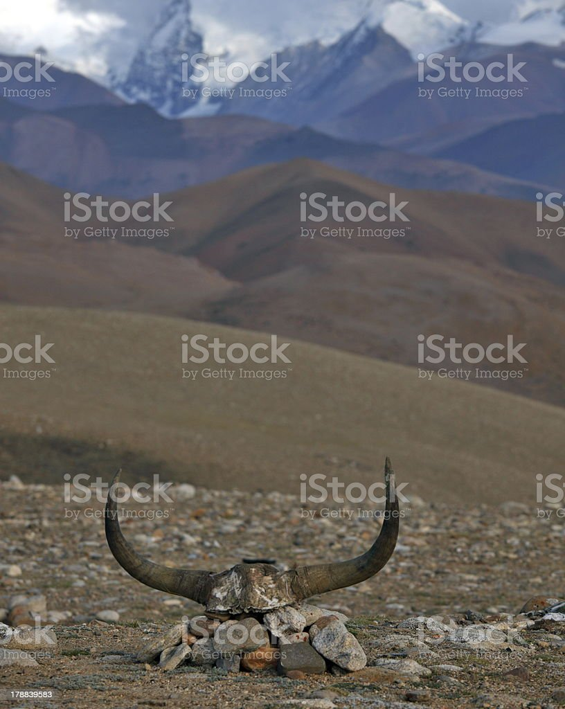 Yak skull decorated with Buddhist mantras royalty-free stock photo
