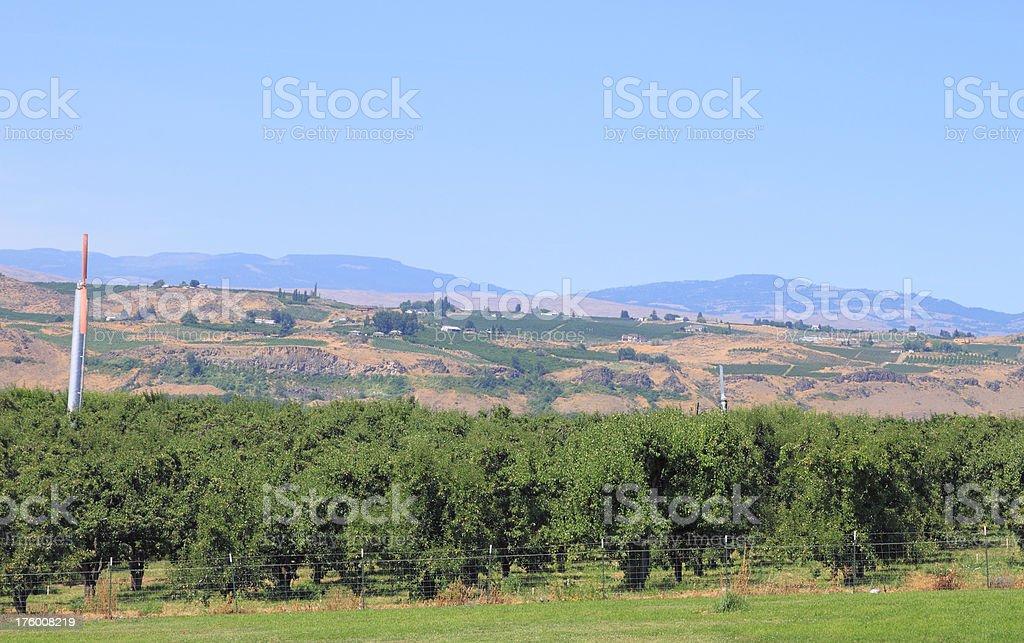 Yakima County farmland royalty-free stock photo