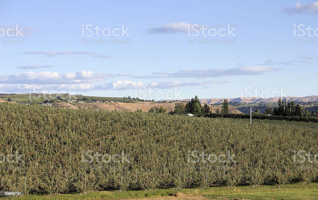 Yakima Valley stock photo