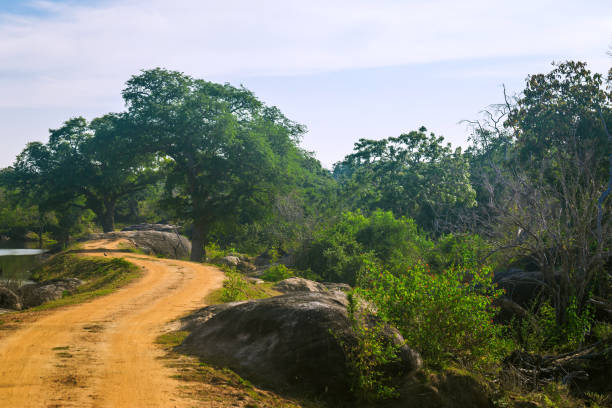 Yala National Park, Sri Lanka, Asia. Yala National Park, Sri Lanka, Asia. Beautiful road, lake and old trees. Forest in Sri Lanka, Big stone rock in the background. Summer day in wilderness, holiday in Asia. yala stock pictures, royalty-free photos & images