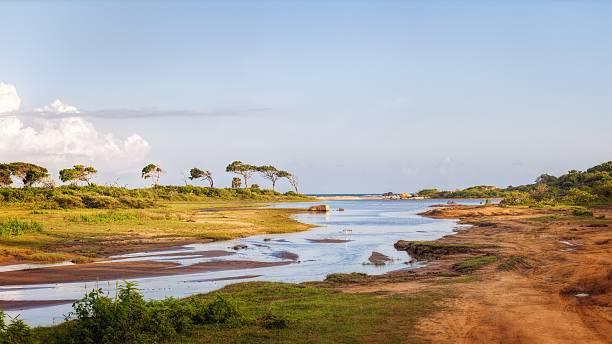 Yala National Park, Sri Lanka Wetlands in the Yala National Park, Sri Lanka yala stock pictures, royalty-free photos & images