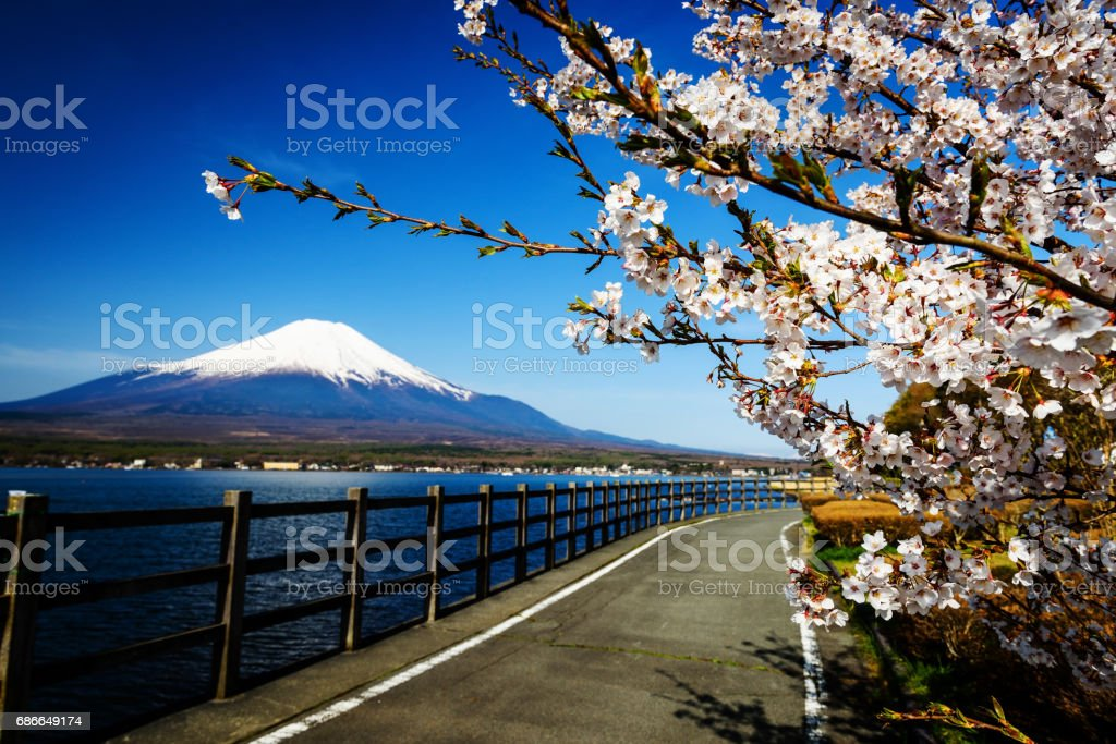 Yamanaka lake shore road with Sakura or Cherry blossom and Mt. Fuji, Yamanashi royalty-free stock photo
