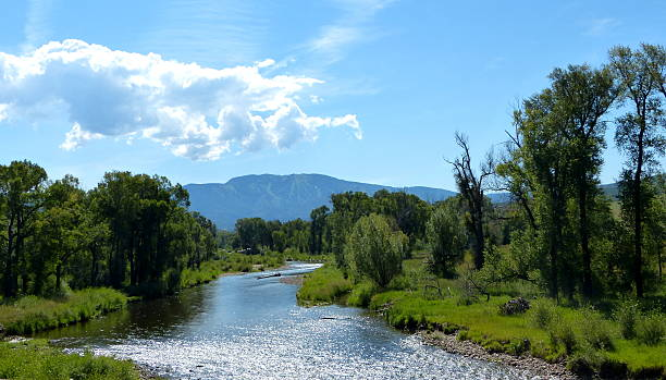 Yampa River in Steamboat Springs The Yampa River flows through Steamboat Springs, Colo. steamboat springs stock pictures, royalty-free photos & images