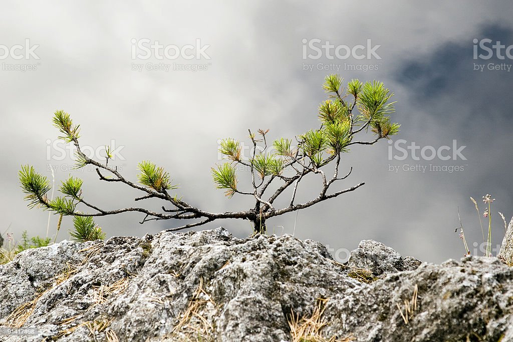 Yang fog tree royalty-free stock photo