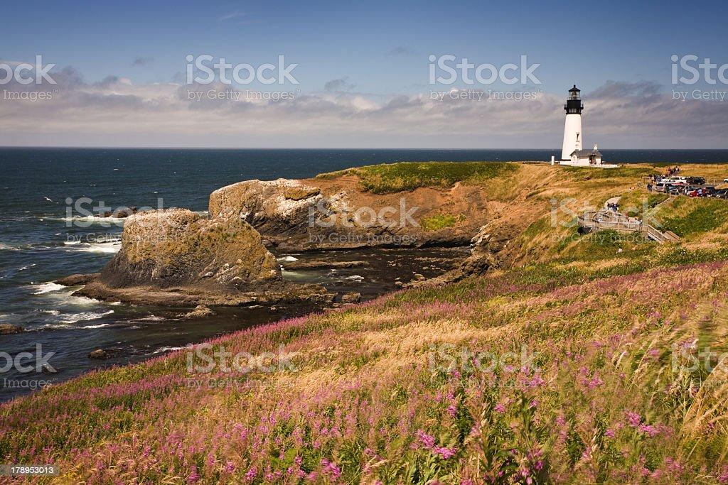 Yaquina Head Lighthouse on a wildflower covered Oregon coast stock photo