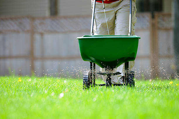 Yard fertilizing Using a broadcast spreader on a green lawn. mowing stock pictures, royalty-free photos & images