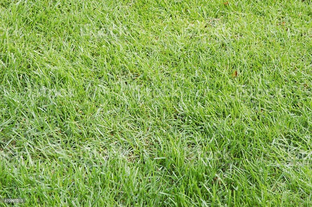 Yard Grass Texture royalty-free stock photo