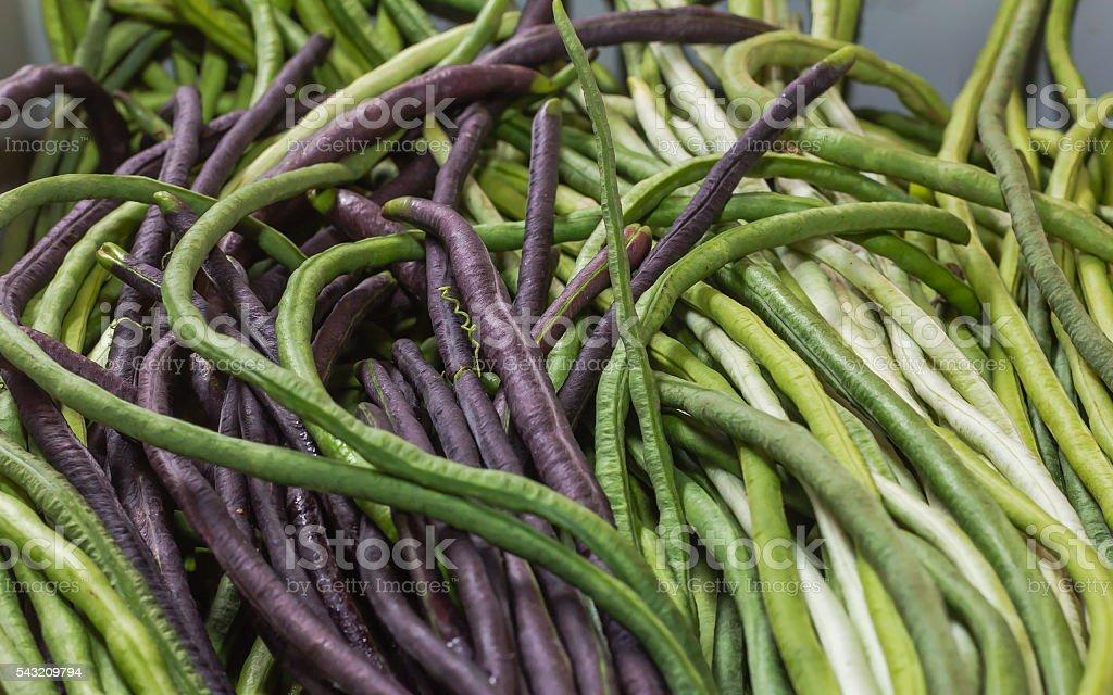Yardlong Beans stock photo