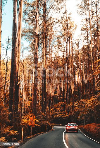 istock yarra ranges national park 855521708