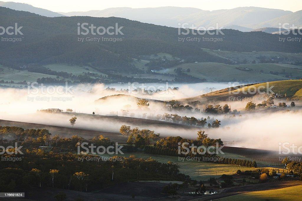 Yarra Valley Fog at Sunrise stock photo
