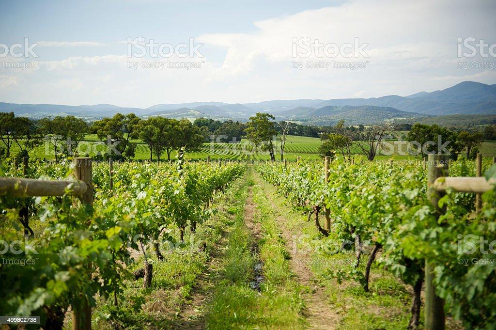 Yarra Valley Winery stock photo