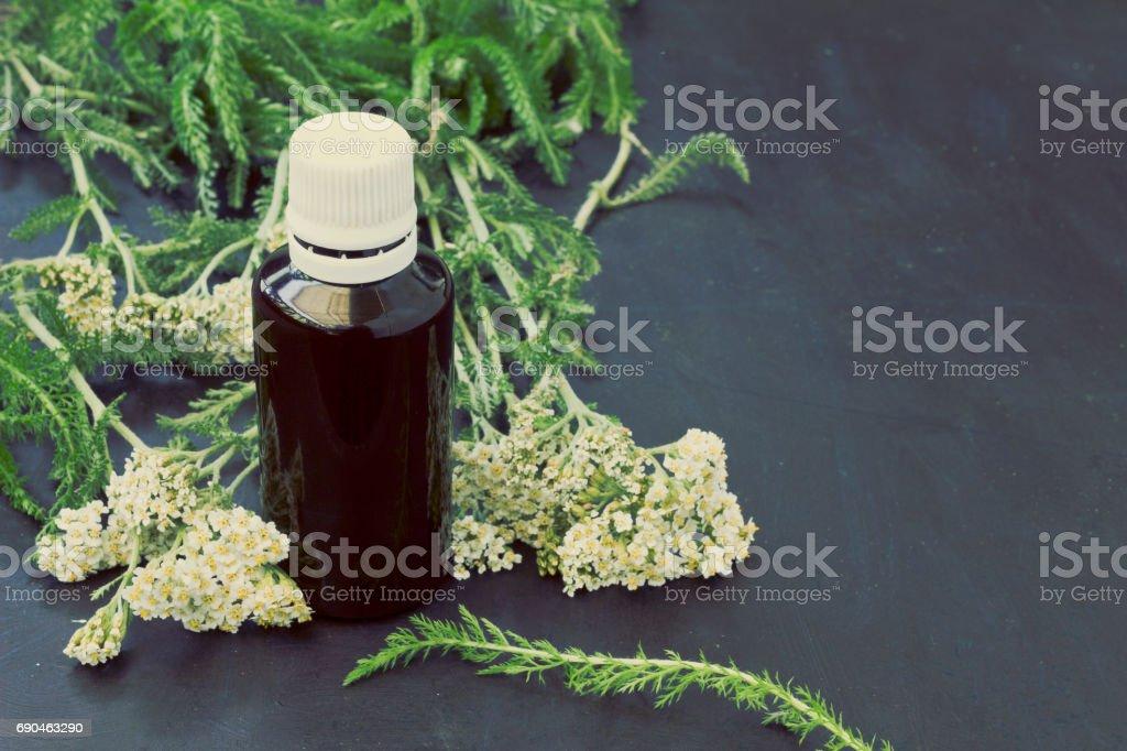 Yarrow Achillea Millefolium stock photo