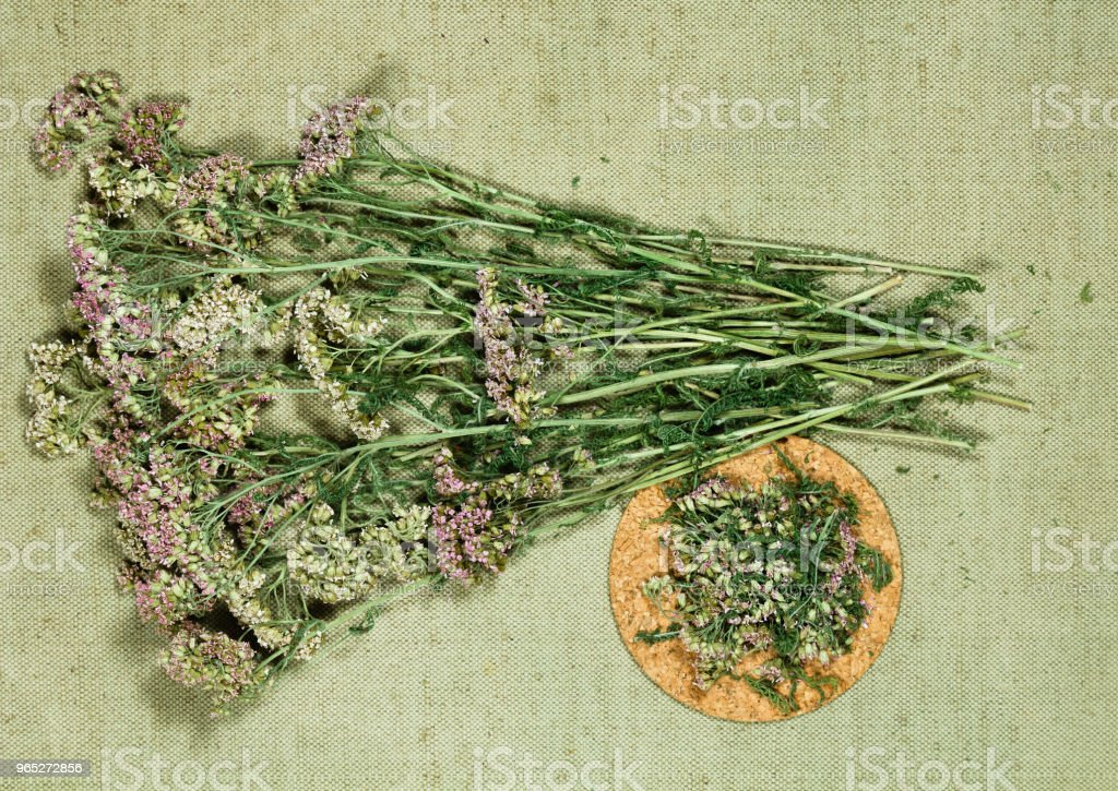 Yarrow. Dry herbs. Herbal medicine, phytotherapy medicinal herbs. royalty-free stock photo