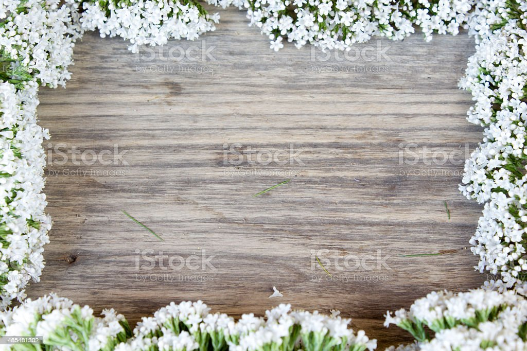 yarrow flower, herbal plants on wooden table with copy space stock photo