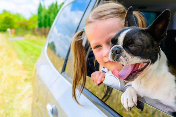 Yawning dog and little girl looking out the open car window stock photo