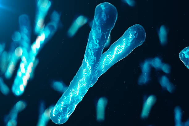 Y-Chromosomes with DNA carrying the genetic code. Genetics concept, medicine concept. Future, genetic mutations. Changing the genetic code at the biological level. 3D illustration stock photo