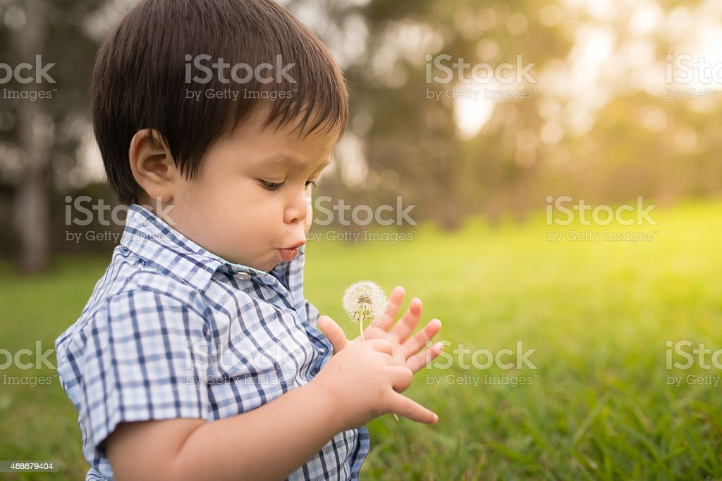 1 year old boy picks dandelions in a park stock photo