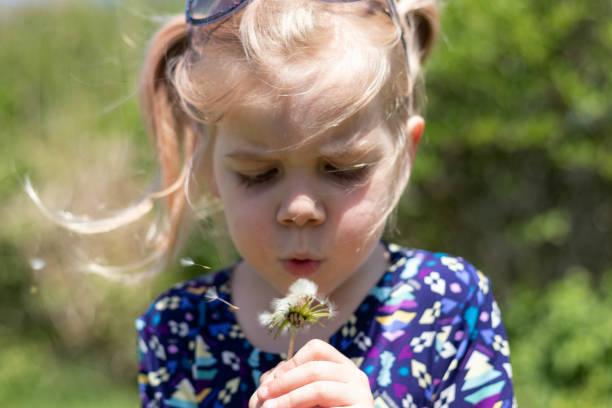 3 Year Old Girl Blows Dandelion Seeds 2 – zdjęcie