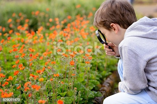 525737167 istock photo 7 years boy looks at the colorful flowers 529051470