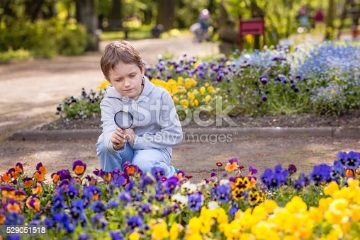 525737167 istock photo 7 years boy looks at the colorful flowers 529051518
