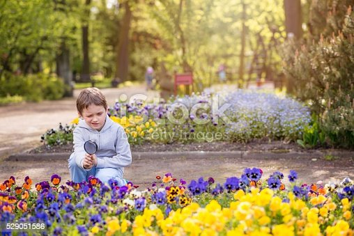 525737167 istock photo 7 years boy looks at the colorful flowers 529051586