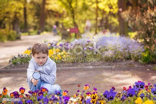 525737167 istock photo 7 years boy looks at the colorful flowers 529051640