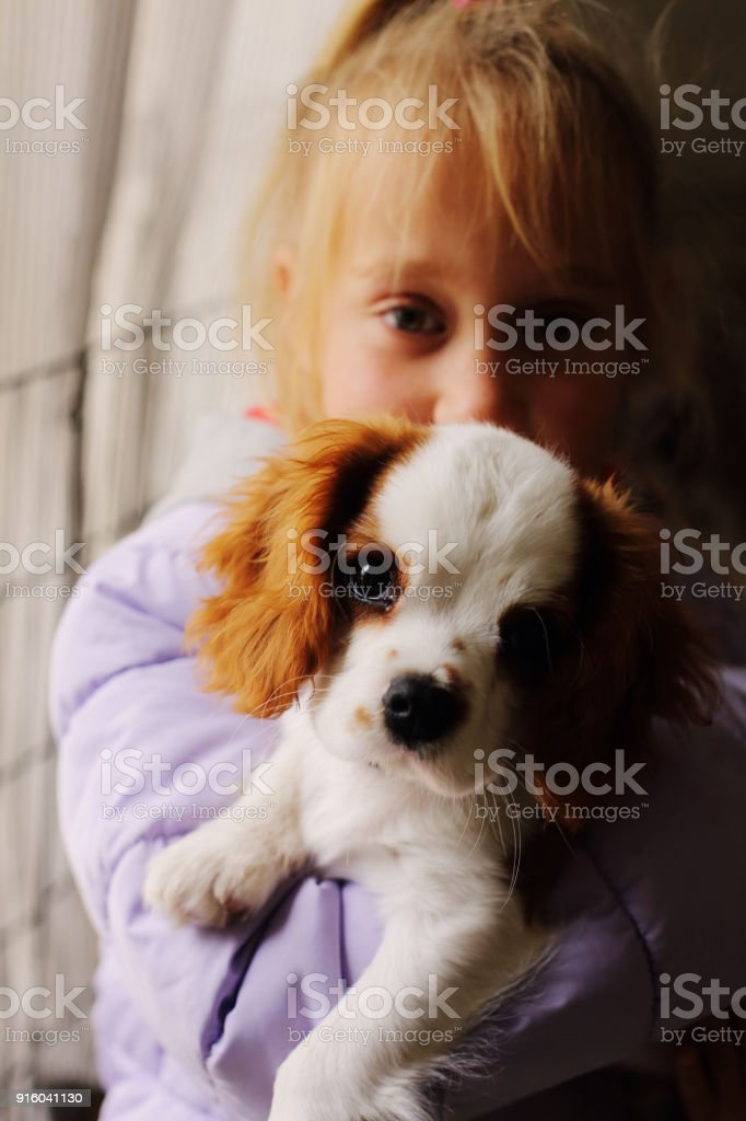 7 years olf girl holding cute puppy stock photo