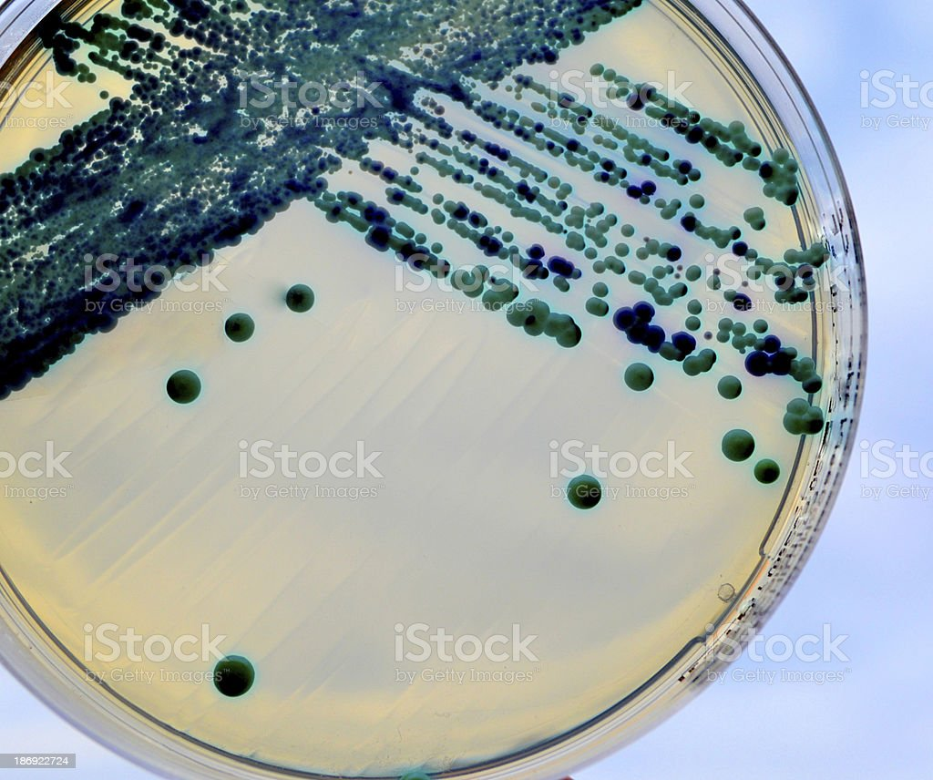 Yeast royalty-free stock photo