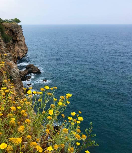 yelllow çiçek ve mavi mediterraneansea - serpilguler stok fotoğraflar ve resimler