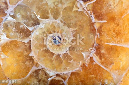 istock yellow ammonite spiral macro 514715282