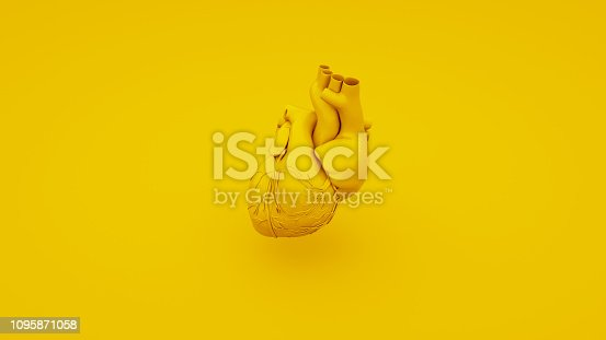 istock Yellow Anatomical Heart Concept. 3D illustration 1095871058