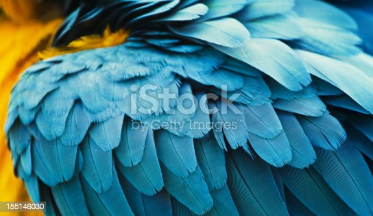 yellow and blue macaw feathers close up