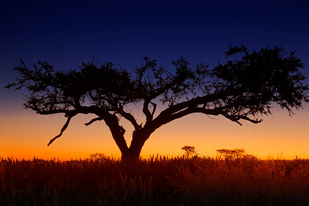 Yellow and blue sunset in Africa stock photo