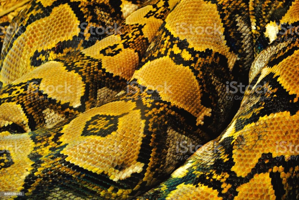 Yellow and Brown Snake Skin Texture – zdjęcie