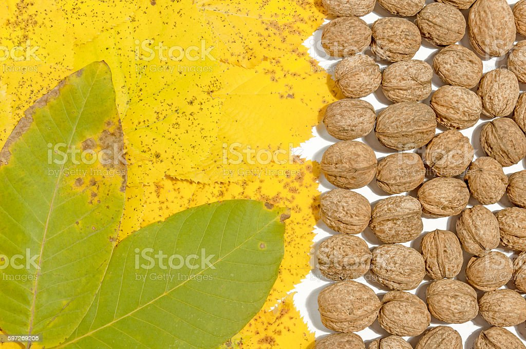 Yellow and geen autumn leaves and lot walnuts Lizenzfreies stock-foto
