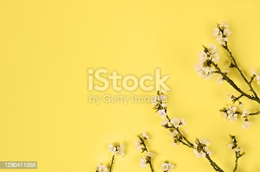 istock Yellow and gray, Color of the year of 2021 Illuminating. branch of a blossoming apricot 1290411055