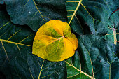 Yellow and green autumn leaves