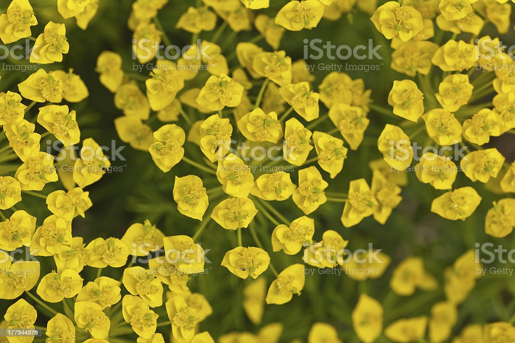 yellow and green flower background stock photo