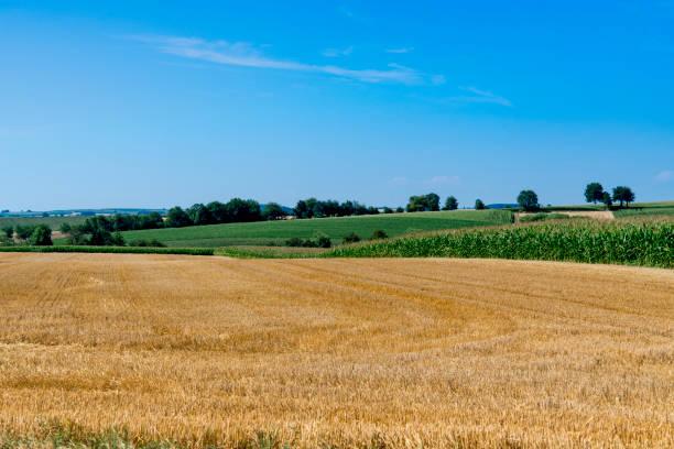 gula och gröna ängs landskapet i hunspach, frankrike - hunspach bildbanksfoton och bilder