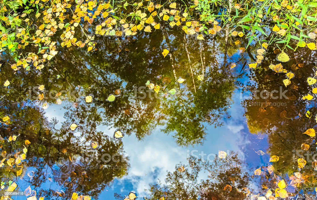 Yellow and green tree leaves in the puddle with reflection royalty-free stock photo