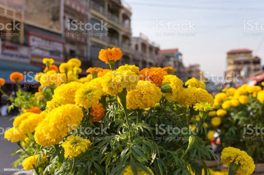 Yellow and orange Carnation flowers for sale at a flower market stall. stock photo