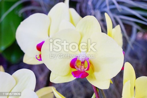 Thailand, Agricultural Field, Beauty, Blossom, Botany