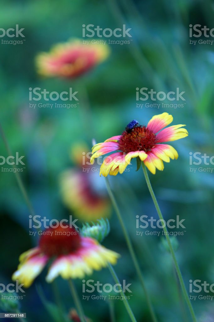yellow and purple flowers stock photo