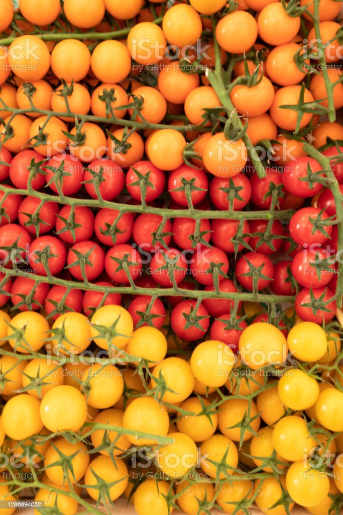 yellow and red cluster tomatoes cluster tomatoes positioned in geometric shape Agriculture Stock Photo