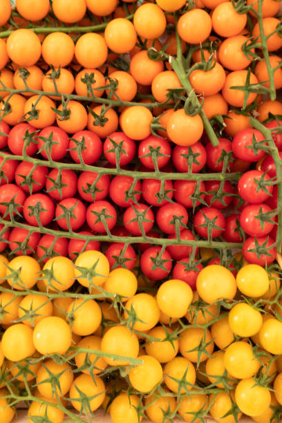 yellow and red cluster tomatoes stock photo