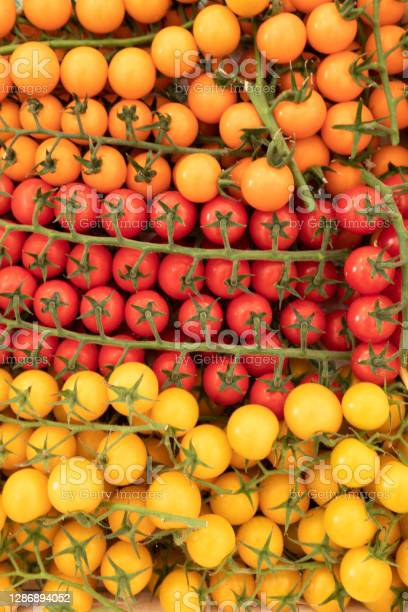 Yellow And Red Cluster Tomatoes Stock Photo - Download Image Now