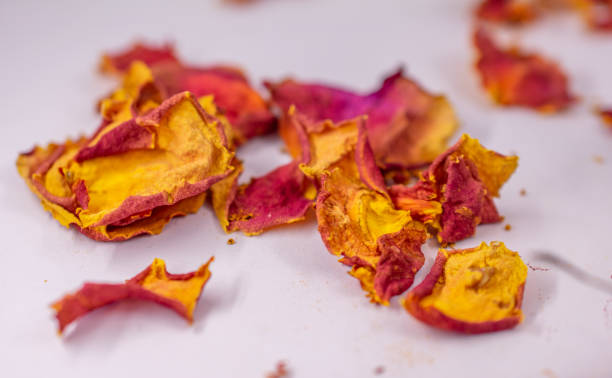 Yellow and Red dry rose petals stock photo