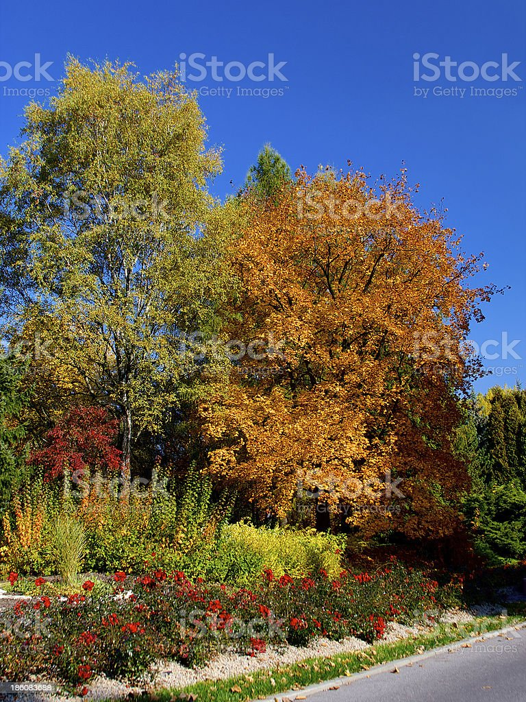 Yellow and red leafs on trees in autumn, october royalty-free stock photo