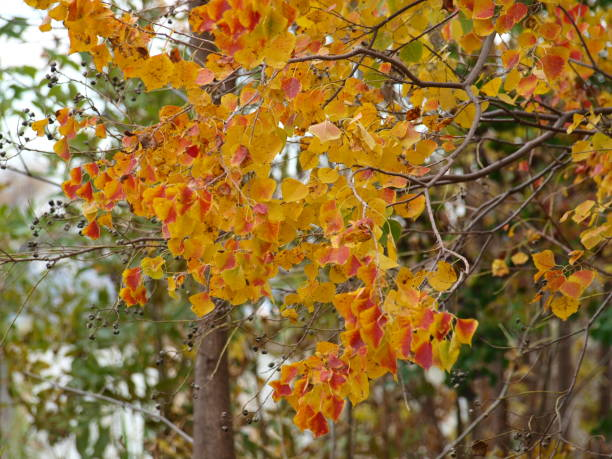 Yellow and Red Leaves Seen in Falltime stock photo