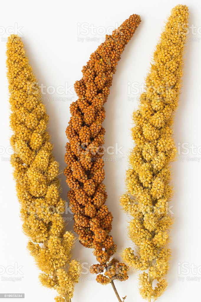 yellow and red millet twigs  on a white stock photo